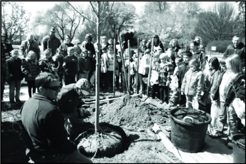 Celebrate Arbor Day at Boerner Botanical Gardens