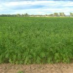 Wisconsin Senate committee OKs hemp farming bill